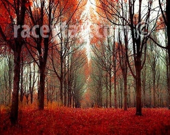 Rustic Wall Art - Fall Forest in Orange Red Brown- Nature Photography- Large Wall Art, Cabin Decor