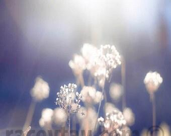 Purple Decor, White, Flower Photograph, Blue, Beige, Purple, Neutral, Nature Photography, Shabby Chic