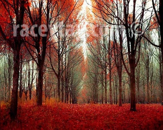 Fall Forest, Rustic Cabin Decor, Nature Photography, Fine Art Print, Orange, Red, Wall Art, Man Cave