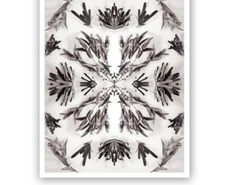 Botanical Print 8x10 Photograph Gum leaves Banksia Collage Nature Monochrome Wall Art Home Decor Australian Design Sirtom Fine Art Print