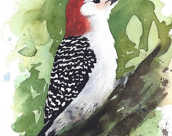 Red-bellied Woodpecker Watercolor Painting - Fine Art Archival Print - Limited Edition Bird Art by Laura D. Poss