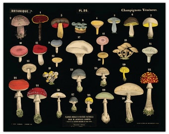 Mushroom Chart Print - Vintage French Reproduction from Planches Murales d'Histoire Naturelle -  Fungi Educational Poster CP265