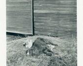 "Vintage Photo ""They Had an Arrangement"" Cat Puppy Dog Animal Snapshot Photo Old Antique Black & White Photograph Found Paper Ephemera - 107"