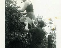 "Vintage Photo ""The Pickers"" Fruit Orchard Pipe Snapshot Old Antique Photo Black & White Photograph Found Paper Ephemera Vernacular - 207"