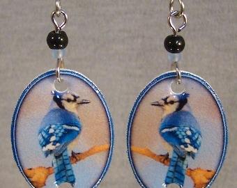 Blue Jay dangle earrings - backyard bird jewelry - surgical steel