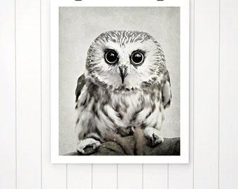 Owl photo, owl photography, cute owl print, saw-whet owl, nature, owl photography owl picture nursery art, kids room, nursery decor print