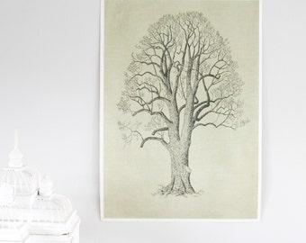Vintage Botanical Print, Aspen Tree, Handmade Silkscreen Print