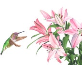 Hummingbird with Lilies print of watercolour painting A4 size medium print - HBL6815 - Lily painting - hummingbird watercolor painting