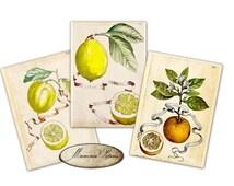 Lemons, oranges, mandarins, Vintage botanical yellow plants   Gift tags, ACEO , Printable Digital Collage Sheet to Download and Print (N215)