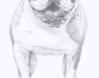 """Custom Pet Portrait 5x7"""" - Sketch From Your Photo in Pencil"""