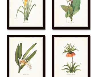 Botanical Print Set No. 7, Coastal Art, Botanicals, Collage, Art, Flower Prints, Antique Botanicals, Prints Sets, Giclee, Tropical Flowers