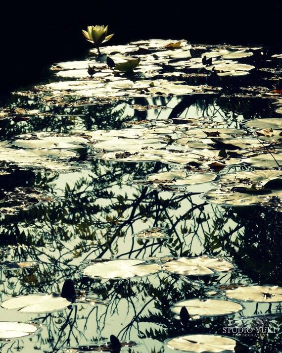 Lotus Nature Photography, Black and White, Spirit Art Print, Flower Decor, Reflection in the Water, Zen, Yoga Studio Art, Meditation Room