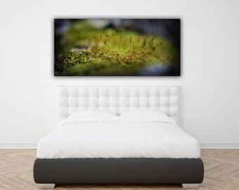 Macro Moss Photograph, Wide Print Panorama Photo Print, Green Nature Panoramic Horizontal Wall Art, Large Over Sized Macro Photography