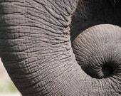 Elephant Photography ~ Gray Minimalist Art, Elephant Trunk Photo, Animal Print, Elephant Wall Art, Children's Room Decor, Nature Print