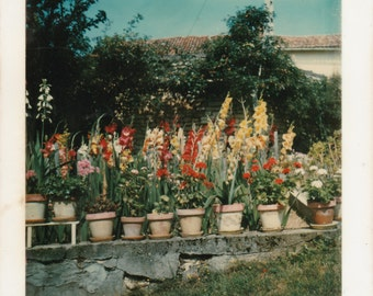 """Retro Snapshot Photo - """"How Does My Garden Grow?"""" - Colourful Flowers In Clay Pots"""