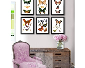 Spring Wall Decor, Butterfly Wall Decor, Natural History Butterfly wall art set of 6 prints, Girls room wall decor, butterfly birthday gift