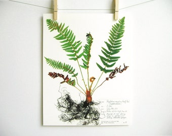 Western Sword Fern Print, #45, pressed fern botanical print herbarium specimen art print fern fiddlehead pressed plant art botany wall art