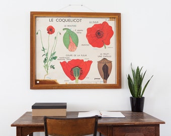 No. 17 & No. 18 - Large Vintage double-sided French school poster - The Poppy and The Wallflower