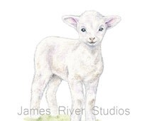 Lamb Art Lamb Painting Lamb Print. Lamb Watercolor Painting Animal Watercolor Barn Animal Farm Sheep Art Print Baby Sheep Baby Lamb Nursery.