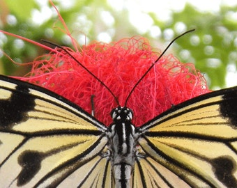 Butterfly Fine Art Photography Print
