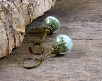 Glass terrarium earrings, Green moss earrings, Blue nature earrings, Forest earrings, Fairy garden earrings, Natural preserved moss jewelry