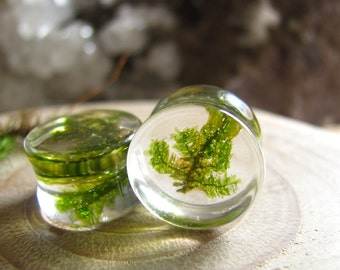 Green Moss Branch Gauges Natural Organic Ear Plugs Minimal Flesh Tunnels Modern Chic Stretchers Alternative Jewelry Unique Gift for Her