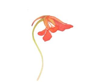 Orange Nasturtium Watercolor / Original Miniature Botanical Painting / Floral Fine Art / Minimalist Realistic Illustration / Garden Flower
