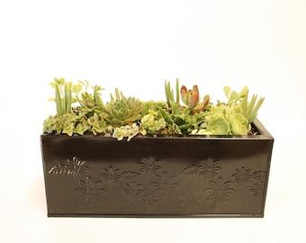 Large Succulent Window Box