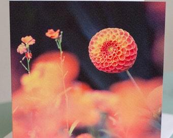 Photographic Greeting Card - Dahlia Study II