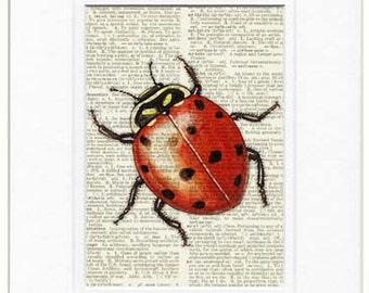 red ladybug dictionary page print