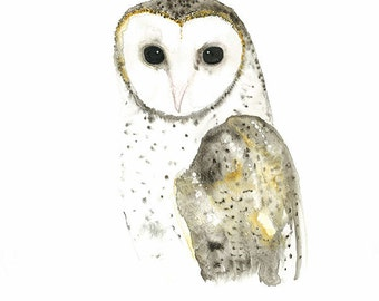 Owl Watercolour, Australian Barn Owl, Gallery Wall, Bird Watercolour, Hibou Aquarelle, Woodland Painting, Nature Art