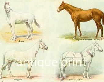 1922 Horse Breeds Print. EnglishThoroughbred horses. Horse breeds identification chart.Farm Decor