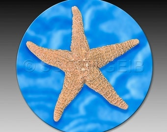 Star Fish - a very absorbent Coaster.  Make a great little gift for anyone who loves the beach!