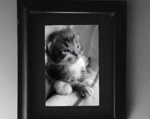 Tabby Cat Photo Black and White with Color Eyes Blue Eyed Kitten Photography Gift Feline Portrait Home Decor Vet Office Decor Wall Hanging