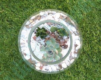 Handmade succulent terrarium / Party decoration / Small room gardens / Low maintenance plants / Different sizes
