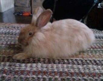 Broken Angora Rabbit Fiber (0.5 ounces)