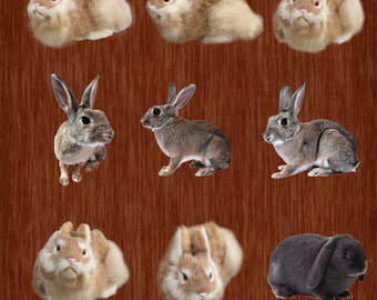 5 Realistic Fake Bunny Overlays
