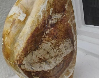 Cut base Polished Petrified Wood Fossil from Indonesia
