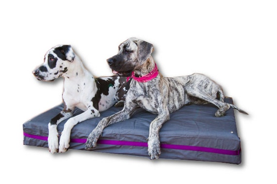 Dark Grey And Purple Xxl Dog Bed For Big Dogs By