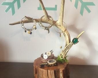 Modern Rustic Whitetail Antler Jewelry Rack, Jewelry Antler Holder, Antler Jewelry Holder, Antlers, Rack