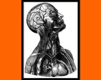Anatomy Poster -  Medical Decor Human Anatomical Medical Wall Decor Anatomical Neck   Reproductiont