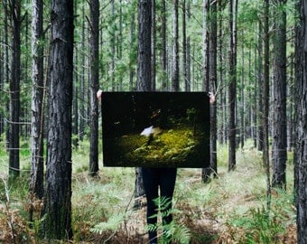 Large Poster Print {Out of the Woods}