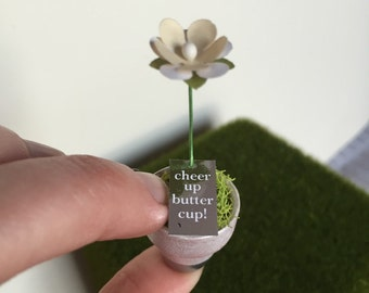 Cheer up, Buttercup! Make someone's day with this tiny poppy in a pot.