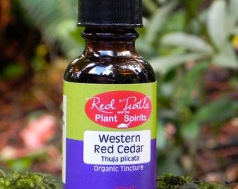 Western Red Cedar Tincture, Organic (Thuja plicata) 1 fl.oz.