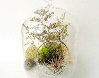 Air- plant terrarium