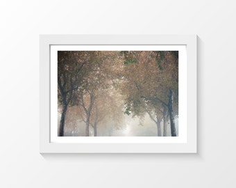 "Gray street / Trees street mist autumn photo printable wall art home decor downloadable art to print yourself / A3 and 11"" x 17"""
