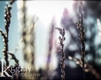 Prairie Grass - PRINT ONLY
