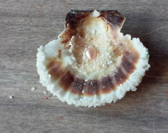 Half Shell with Potato Pearl