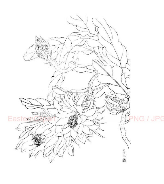 Chinese Flower Line Drawing : Chinese line drawing png digital download clip art black