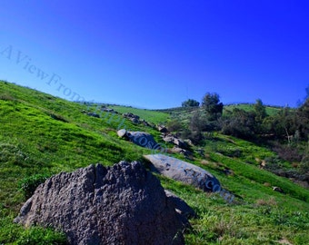 Green Landscape Riverside CA Photograph JV
